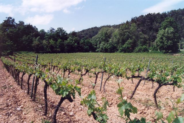 Le Domaine des Roseaux - Barjols