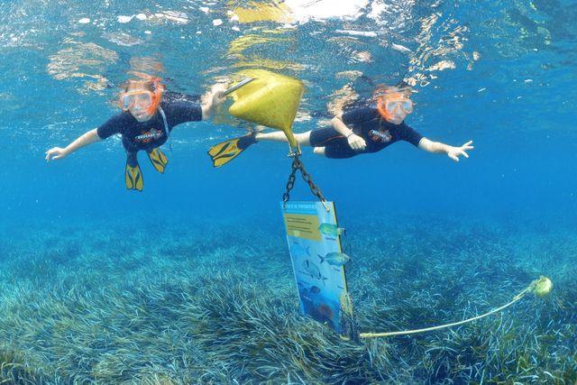 Sentier sous marin à la plage de la Palud - île de Port Cros - Hyères