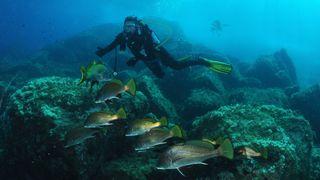Sec du gendarme diving
