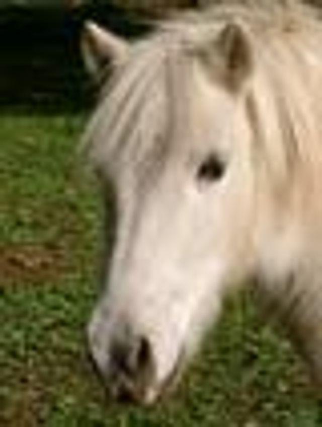 Centre équestre et poney club - Nans les Pins