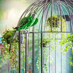 Parrot MiniBar