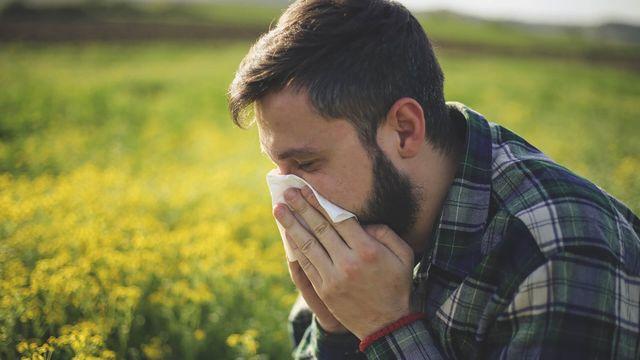 Hooikoorts en allergie