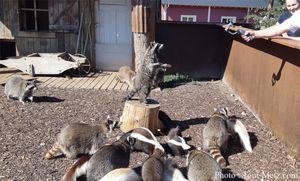 Rhodes : le parc animalier de Sainte-Croix rouvre ses portes
