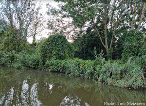 Sécheresse : la Moselle à court d'eau, la situation se dégrade