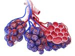 Research points to possible target to treat idiopathic pulmonary fibrosis, or IPF