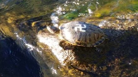 Turtles With Swastikas on Their Shells Are Crawling Around a Park in Washington