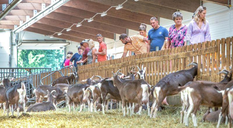 FOTOD Nädalavahetusel võõrustas külalisi ligi 20 Võrumaa talu
