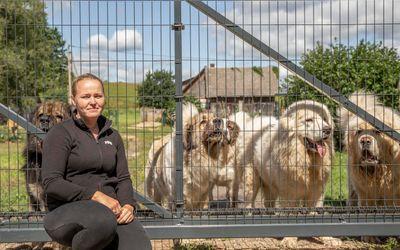 Kennelipidajad pistavad rinda neljajalgsete salapäraste surmajuhtumitega