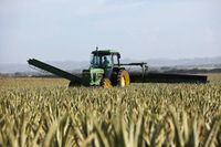 Dobre rozwiązanie dla rolników: uproszczone postępowanie restrukturyzacyjne