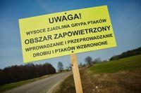 Trwa dramat hodowców drobiu. Ptasia grypa nie odpuszcza na Mazowszu i w Wielkopolsce