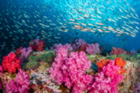 Highlights - Joint CONT-ENVI presentation of ECA Report on Marine Environment Protection - Committee on the Environment, Public Health and Food Safety