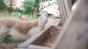 Meurthe-et-Moselle : une dizaine d'agriculteurs du réseau Bienvenue à la ferme vous ouvrent leurs portes en mai et juin