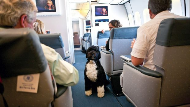 August 2010: Bo, the first dog, visits with the press corps on board Air Force One as then President Barack Obama and members of his family travel to Panama City, Florida. Photograph: Doug Mills/The New York Times
