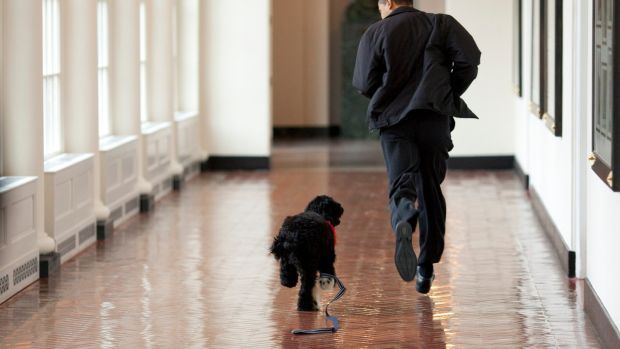 Michelle and Barack Obama shared on their social media that their dog Bo had died from cancer. Photograph: Pete Souza/The White House/Getty Images