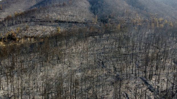 A burnt mountain after a wildfire in Papades village on Evia island in Greece. Photograph: Michael Varaklas/AP Photo