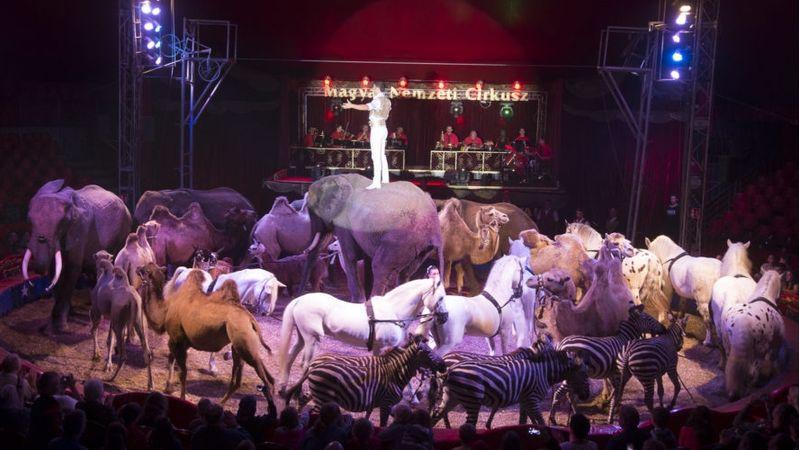 Így kerül 100 állat, a Richterek és egy afrikai énekesnő az Arénába