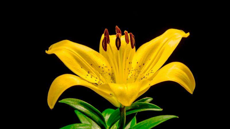 Egy szál sárga liliom – ennyit kér a család Aradszky László tisztelőitől