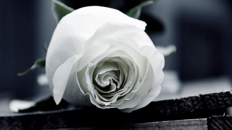 Március 20-án búcsúznak el Koós Jánostól