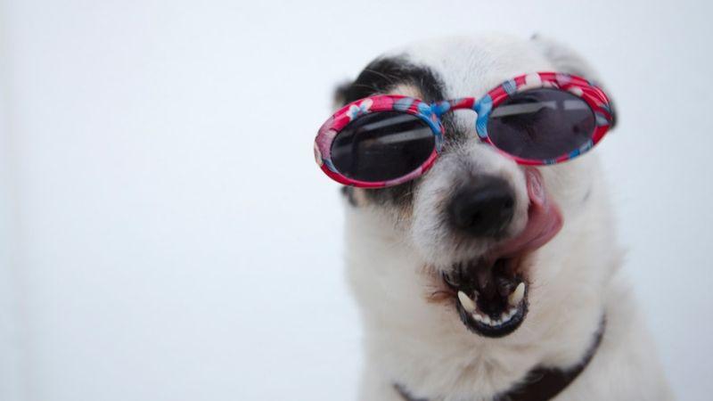 A kutyajósdától a sörfesztiválig