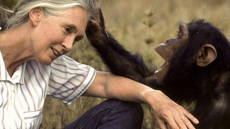 Ilyen még nem volt a Nagyszínpad történetében: egy volt amerikai alelnök és Jane Goodall is fellép a Szigeten!