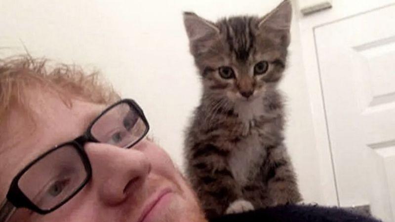 Ed Sheeran a cicáját siratja