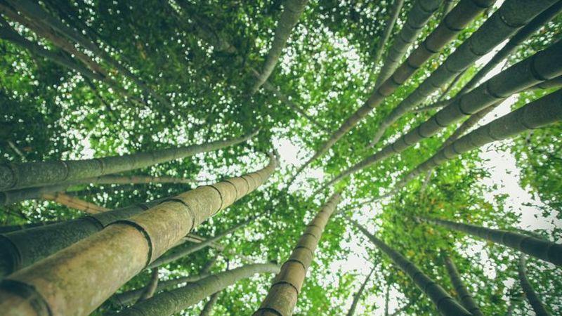 Paso, Saiid – az esőerdőkért mozgósítanak a magyar zenészek, lehet csatlakozni!