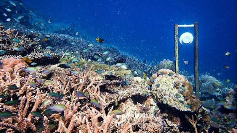 Apropó: újévi fogadalom – víz alatti hangterápiával mentik a korallokat
