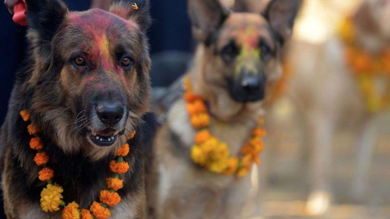 Nepálban a kutyáknak külön fesztiválja van – javasolunk pár számot a setlistbe