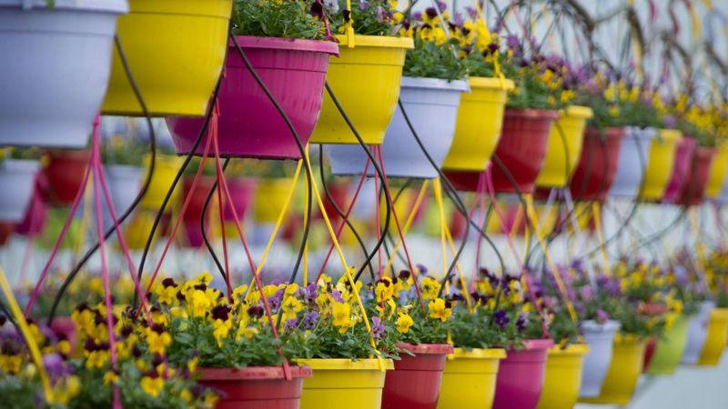 Aki a virágot szereti – az zenél a kertészetben