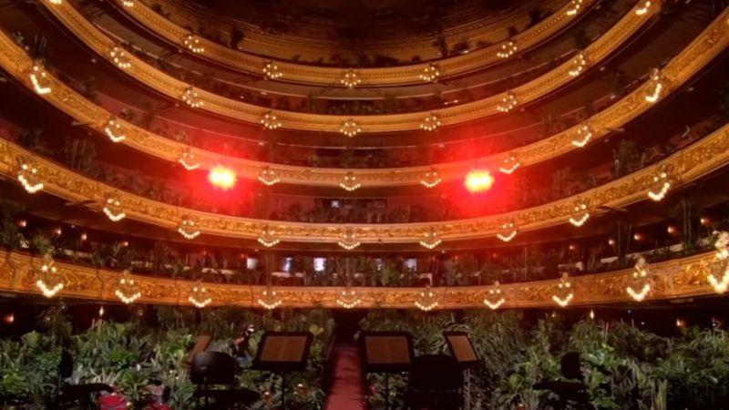 Páfrányoknak adtak koncertet Barcelonában