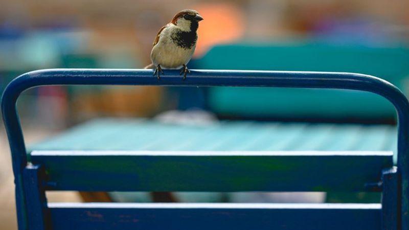 Reméljük, nem az lesz az új szlogen: Bulinegyed – ahová a madár se' jár (Fotó: Mika kert)