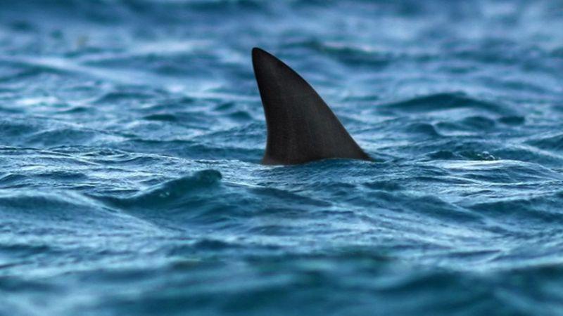 S akkor a cápa beúszik a Teleki térre...