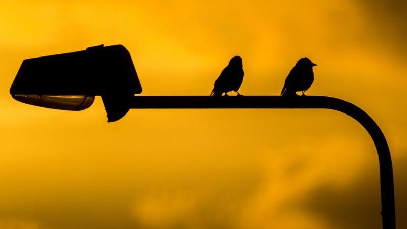 Az emberek felhagytak a zajongással – a madarak szexibb hangon énekeltek a karantén alatt