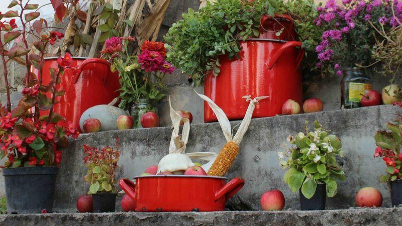 Októberben PirosLábos a Szentendrei-szigeten