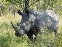 World Rhino Day calls for urgent effort to save 27,000 remaining rhinos