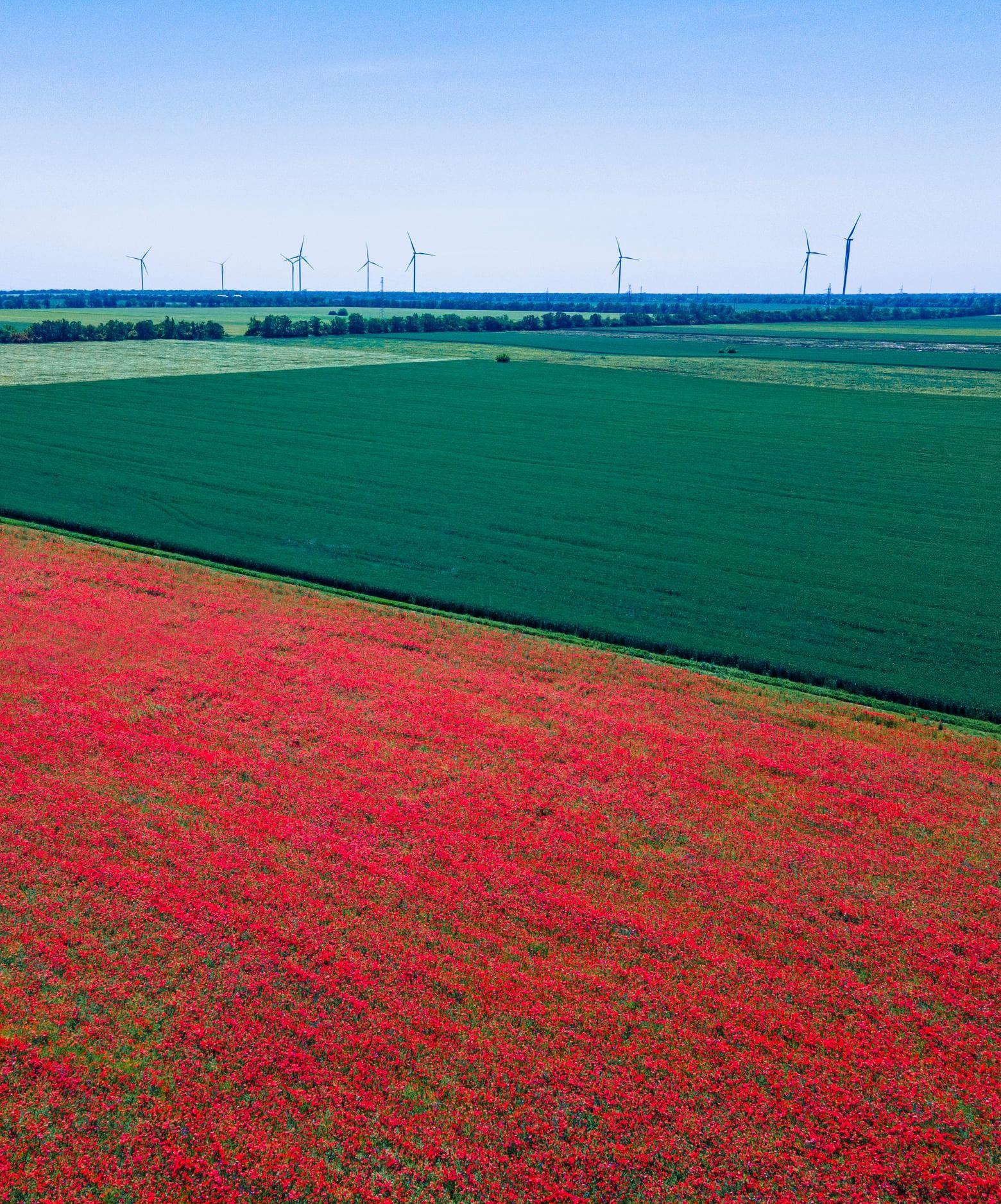 Пекуче макове поле: українців вразили неймовірно красиві фото