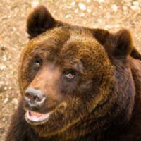 """Parco nazionale d'Abruzzo: In Ciociaria nasce la """"zona di protezione"""", per tutelare orsi marsicani, lupi e camosci"""