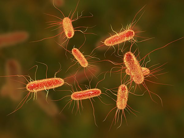 Crohn's disease patients have specific IgG antibodies to human bacterial flagellins