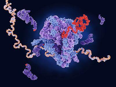 Hypoxia, a feature inside solid cancer tumors, reprograms methylation of ribosomal RNAs