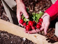 Tended by Blazers, these UAB Gardens plots grow produce for the food-insecure on campus