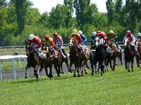 Biomécanique: les mathématiques aident à optimiser les performances du cheval de courses