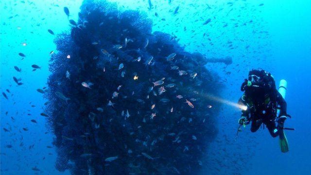 Plongée sur le Togo sur la côte de Cavalaire