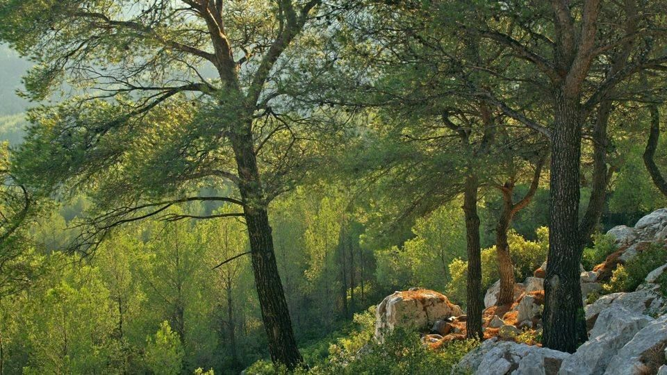 Massif forestier du Var : Pentes du Gros Cerveau
