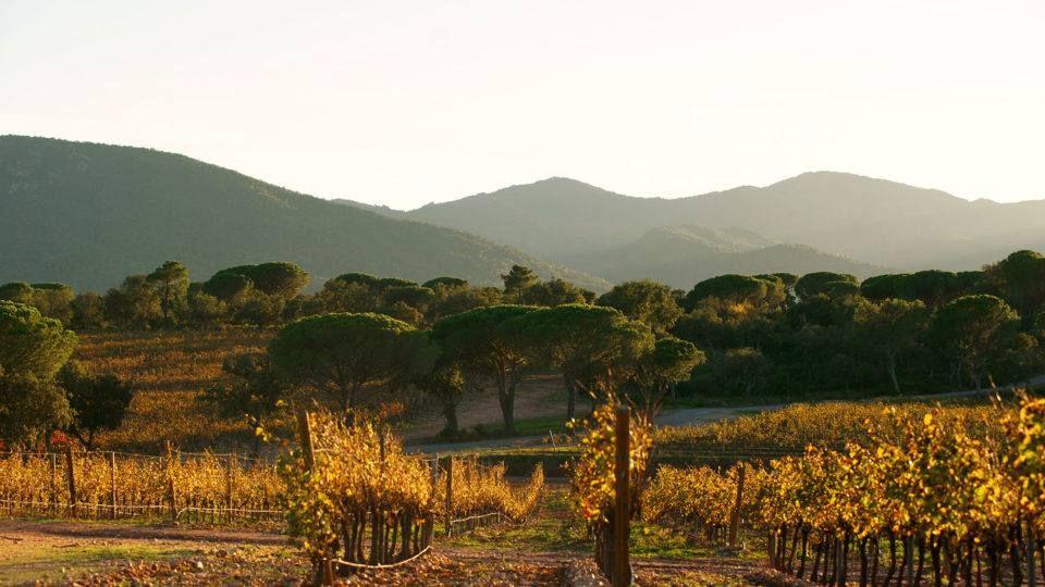 Vue de vignes en automne