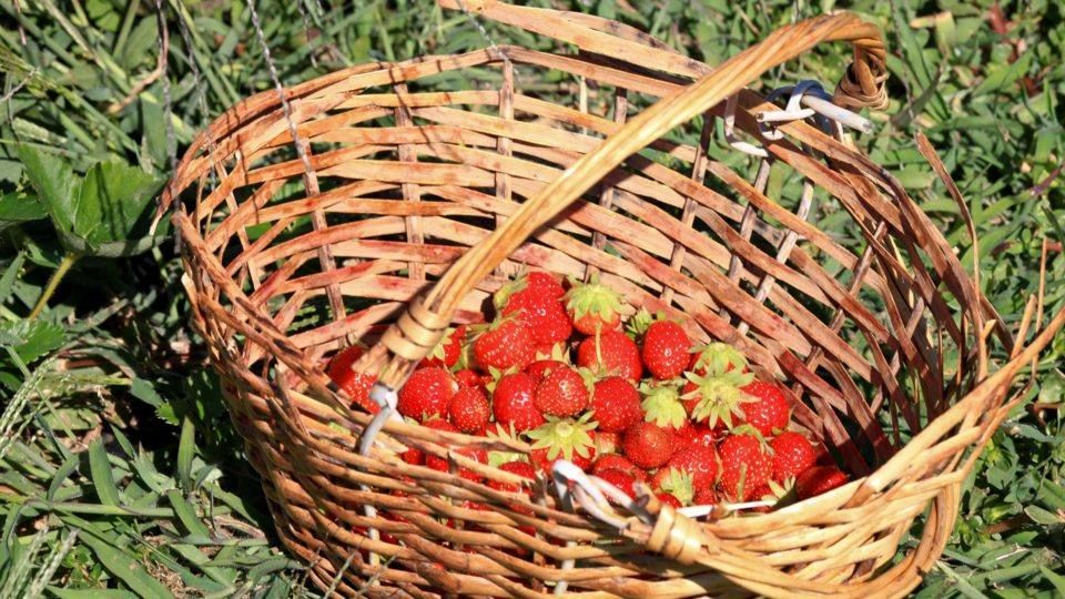 Strawberries from local producer