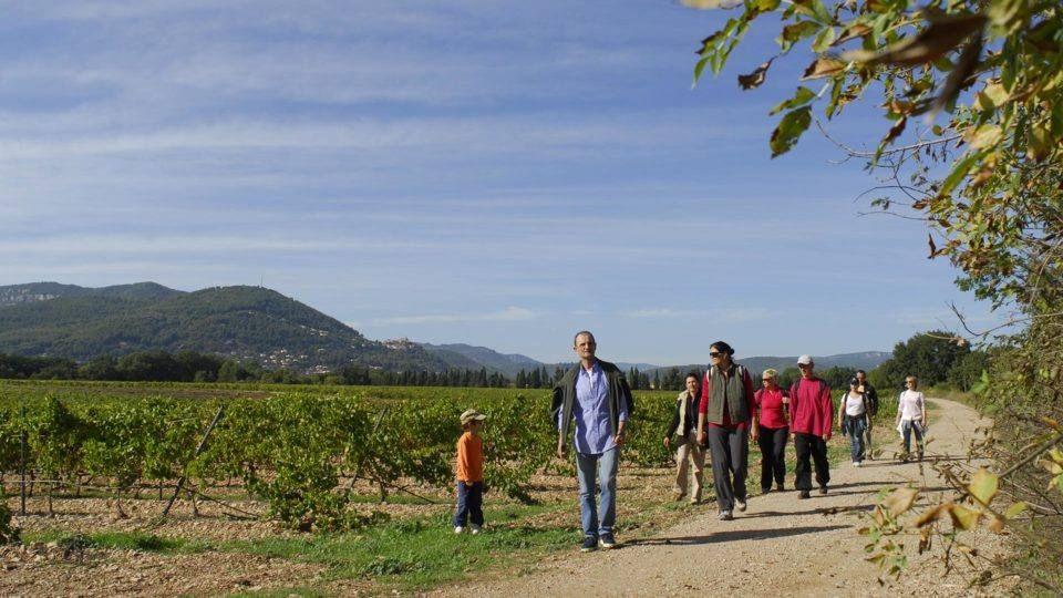Balade entre les vignes de Solliès