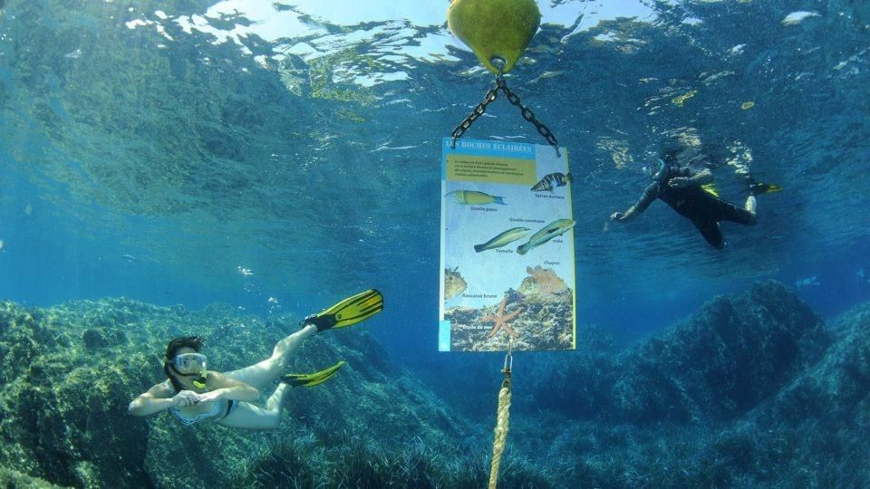 Des palmes, un masque et un tuba, le sentier sous-marin de Port Cros