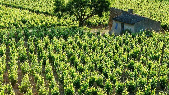 Cabanon dans le vignoble de Bandol