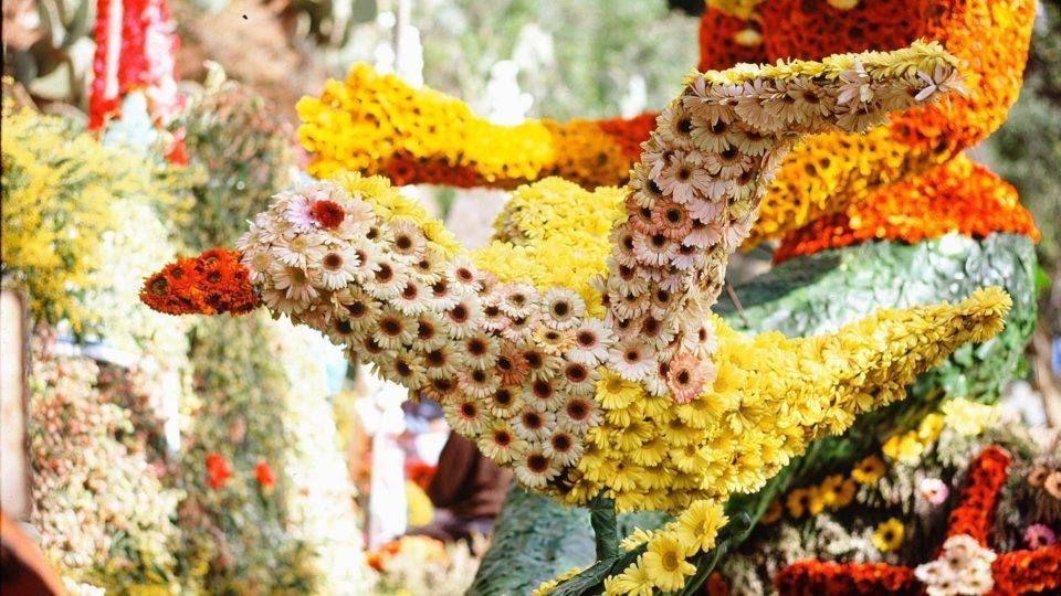 Corso fleuri à Bormes les Mimosas
