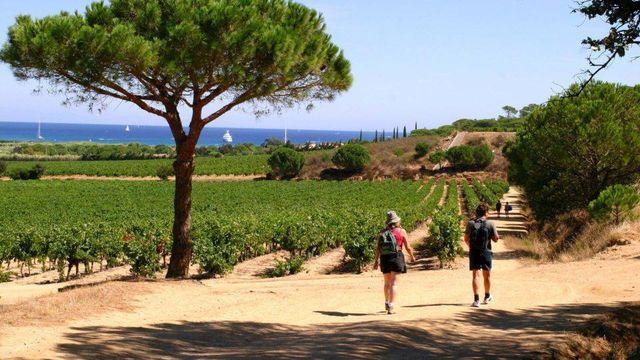 Balade entre les vignobles et la mer - Ramatuelle dans le Var